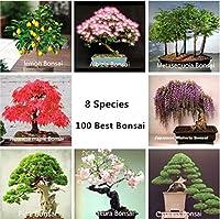 100個/ロット - 8種類の盆栽ツリー盆栽、完璧なDIYホームガーデン盆栽パッケージバルコニー、家庭、庭、庭:100 - サイプレス