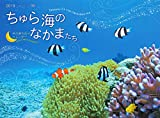 2019うみまーる中判ムーンカレンダー `ちゅら海のなかまたち−Friends of the Okinawan sea' (月の満ち欠け)