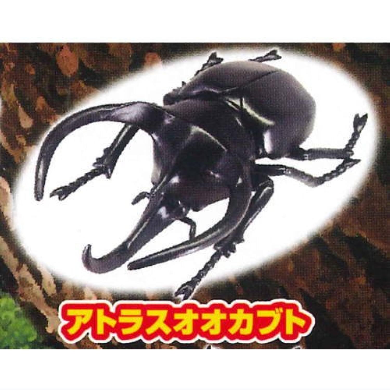昆虫の森G カブト クワガタ バッタ 緑の大決闘 [2.アトラスオオカブト](単品)