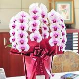 < お祝い花 フラワーフラワーギフト プレゼント 贈り物におすすめ> 胡蝶蘭3本立(リップ) 1.2万円コース