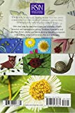 RSN ESG: Stumpwork: Essential Stitch Guides (Royal School of Needlework Essential Stitch Guides) 画像