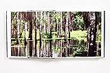 Rainforest 画像