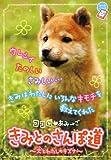 ココロ・あみ→ご きみとのさんぽ道―犬とわたしのキズナ (ちゃおノベルズ)