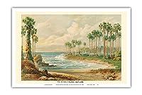 パルミラのヤシの木(トディの手のひら) - スリランカ(セイロン) - ビンテージな植物のイラスト によって作成された エルンスト・ヘイン c.1889 - アートポスター - 31cm x 46cm