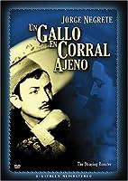 Gallo En Corral Ajeno