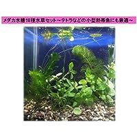 18種 簡単育成水草セット メダカやテトラ向け小型水槽◆綺麗な緑色の水草をセレクト◆