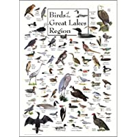 Birds of Great Lakes Greeting Card