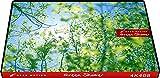 4K408_4K動画素材集グランモーション グリーンシャワー(ロイヤリティフリーDVD素材集)