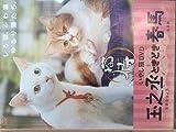 いやし猫DVD 猫侍 玉之丞ときどき春馬[DVD]