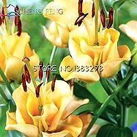 種子パッケージ:ホームGardenbonsのための100個/ロットSpecialsHeartリリー種子盆栽種子盆栽種子リリー盆栽:アーミーグリーン