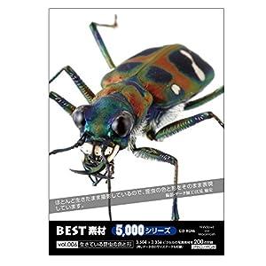 BEST素材5000シリーズ vol.006 生きている昆虫の色と形
