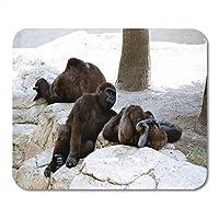 Yantengマウスパッドマウスパッド野生の黒ゴリラ安静時の敷設ヤシの木の岩ノートブック、デスクトップコンピュータのマットのための3つのマウスパッド