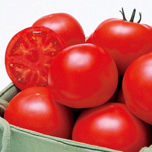 『高糖度フルーツトマトの苗 6個セット』桃太郎品種から高糖度7度以上を厳選した苗はアメーラトマトに匹敵♪