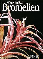 Bromelien: Tillandsien und andere kulturwuerdige Bromelien
