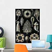 Wallmonkeys Illustration of Calcispongiae Ernst Haeckel Wall Decal Peel and Stick Graphic WM181384 (24 in H x 17 in W) [並行輸入品]