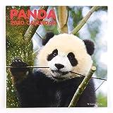 2020年 パンダ カレンダー 壁掛 LPサイズ C-1133-PA