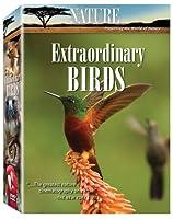 Nature: Extraordinary Birds [DVD] [Import]