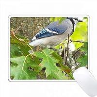 木のブルージェイ PC Mouse Pad パソコン マウスパッド