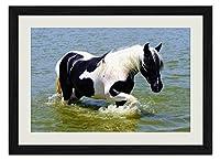川で馬動物の写真 壁掛け黒色木製フレーム装飾画 絵画 ポスター 壁画(40x60cm)