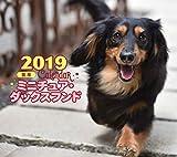 2019年ミニカレンダー ミニチュア・ダックスフンド