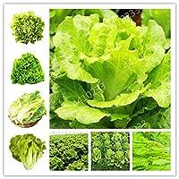 グレートサラダDhoice DIYホームガーデン工場野菜豊富なビタミン中国の葉を成長させるための300個盆栽レタスグッドテイスト簡単
