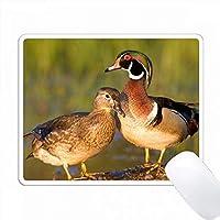ウッドダック男性と女性のログイン湿地、マリオン、イリノイ州、米国。 PC Mouse Pad パソコン マウスパッド