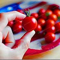 """レアクライミングトマト、""""Cherry Tomatoes - sweet""""ミニトマト盆栽工場盆栽、有機食品ホームガーデン植栽"""