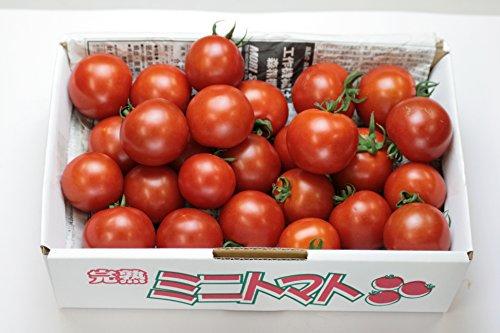 とまと 浜辺さん達のトマト朝摘め中玉トマト1000g