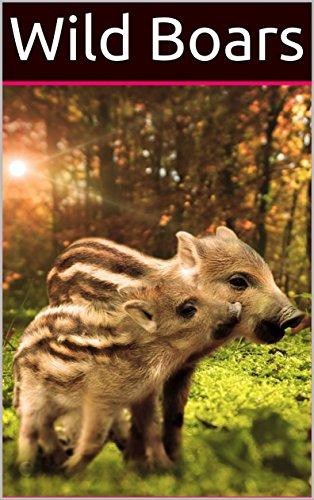 Wild Boars: Photo books Amazin...