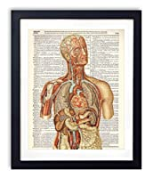 Human Anatomy Color Dictionary Art Print 8x10 [並行輸入品]