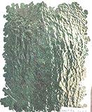 押し花 アジアンタム 緑処理