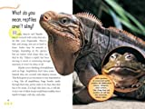 Everything Reptile: What Kids Really Want to Know About Reptiles (Kids FAQs) 画像