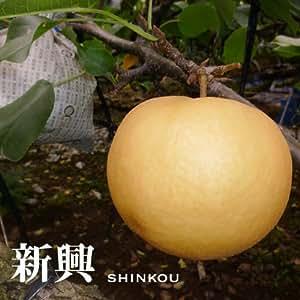 【送料無料】熊本の梨・新興15個入り(5kg) (のし付けられます) 梨の通販(梨の田尻園)