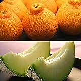 マスクメロン&デコポン 高級フルーツ詰め合わせ メロン デコポン フルーツセット