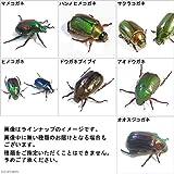 (昆虫標本)コガネムシ 日本産 おまかせ3種(各1匹)標本(未展足) 本州・四国限定[生体]