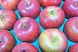 長野県産 生産農家直送りんご 「あいかの香り」自家用ランク 10~18玉 約5kg入り/箱