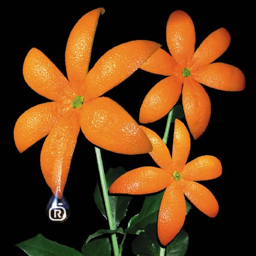 "ORANGE RANGE『花』のキャッチコピーは""○○レンジ""。楽曲の魅力にせまる!!【歌詞情報】の画像"