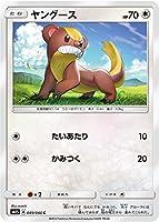 ポケモンカードゲーム/PK-SM1S-049 ヤングース C