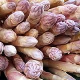 【PLANT】Heirloom Asparagus Argenteuil=d'Argenteuil エアルーム・アスパラガス・アルジェンティウル(2苗)