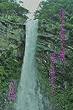あなたの知らない熊野: 那智三名滝をめぐる