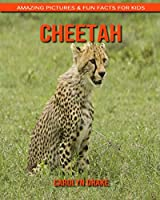 Cheetah: Amazing Pictures & Fun Facts for Kids