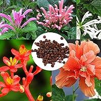 パープル:100個カラフルな美しいハイビスカスコーラルガーデンバルコニー植木鉢付き種子Ehe8 02