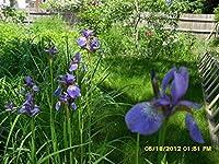 25 PC。罪の人類植物広葉樹春の草の種子Succulents.a