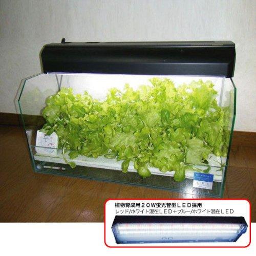 リビングで育てる家庭用水耕栽培キット ベジタクリスタECO(LED照明タイプ)