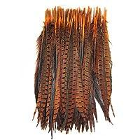 KOLIGHT 50個入りナチュラル染めキジ尾羽30-35cm DIYの装飾 (橙)