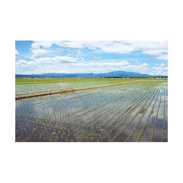 【精米】山形県産 白米 つや姫 5kg 平成29年産の紹介画像4