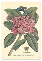 22cm x 30cmヴィンテージハワイアンティンサイン - プルメリア - Flore Roseo Odoratissimo - フランギパニ - ビンテージな植物のイラスト によって作成された ゲオルク・ディオニシウス・エーレット c.1749
