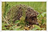 ヘッジホッグ草の葉秋の棘52984のティンサイン 金属看板 ポスター / Tin Sign Metal Poster of Hedgehog Grass Leaves Autumn Spines 52984