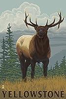 イエローストーン国立公園–Elk 12 x 18 Signed Art Print LANT-31322-708