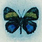 Flora(初回限定盤)(DVD付)